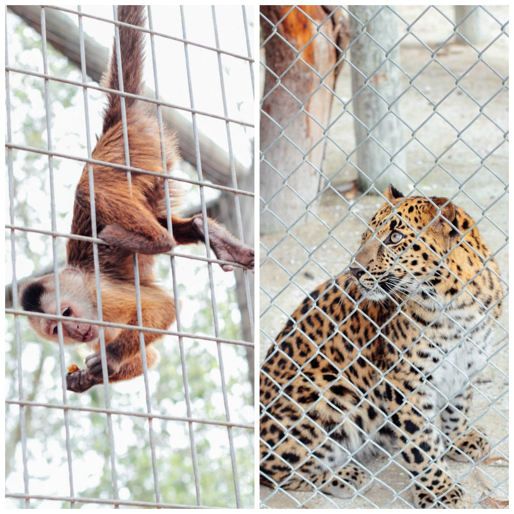 Zoological Wildlife Foundation | Adorned With Love